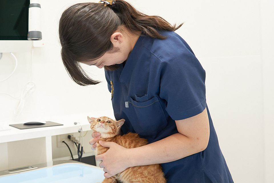 専門診療・治療に限り対応いたします