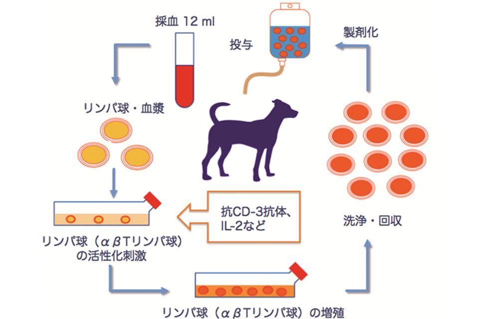 活性化リンパ球療法